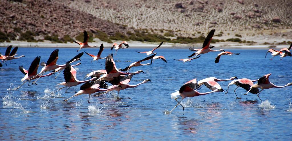 Alto-Atacama-Nature-5-1024x496