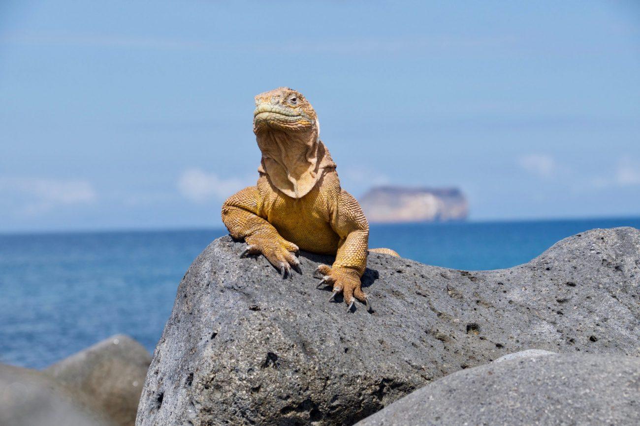 Galapagos Islands, Ecuador-unsplash (6)