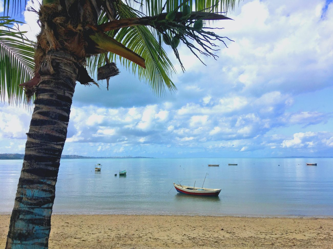 Salvador, Brasil, coqueiro na praia de tubarao-unsplash