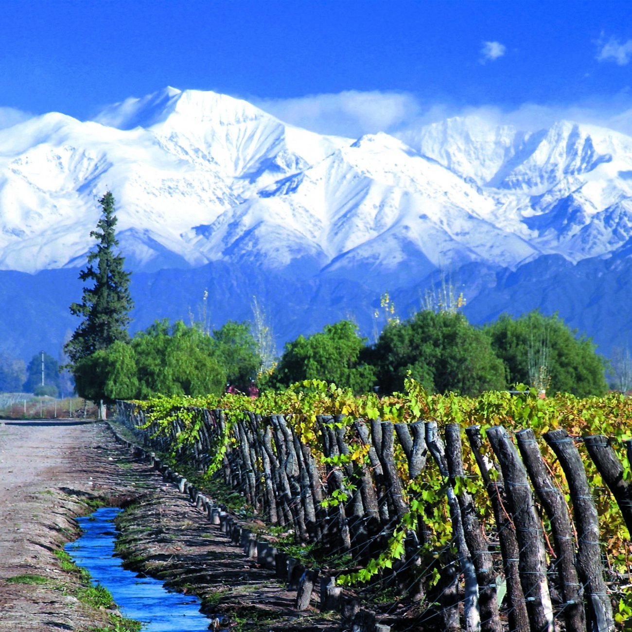 Wineyard Mendoza (2)