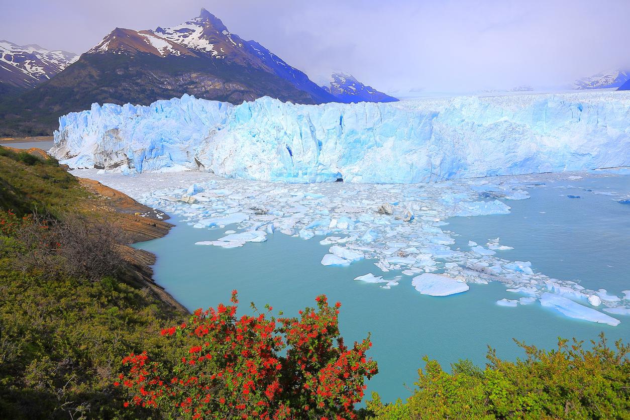 Bright Moreno Glacier, flowers, ice floe, Lake Argentina, Patagonia, Calafate