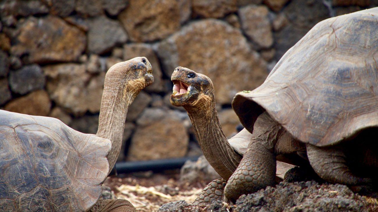 Plavba po Galapágách