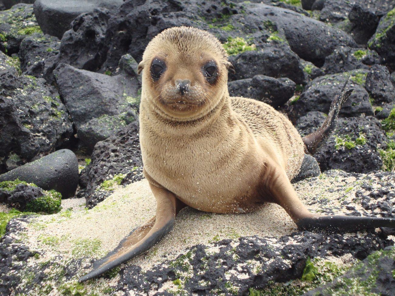 sea-lion-1641036_1920