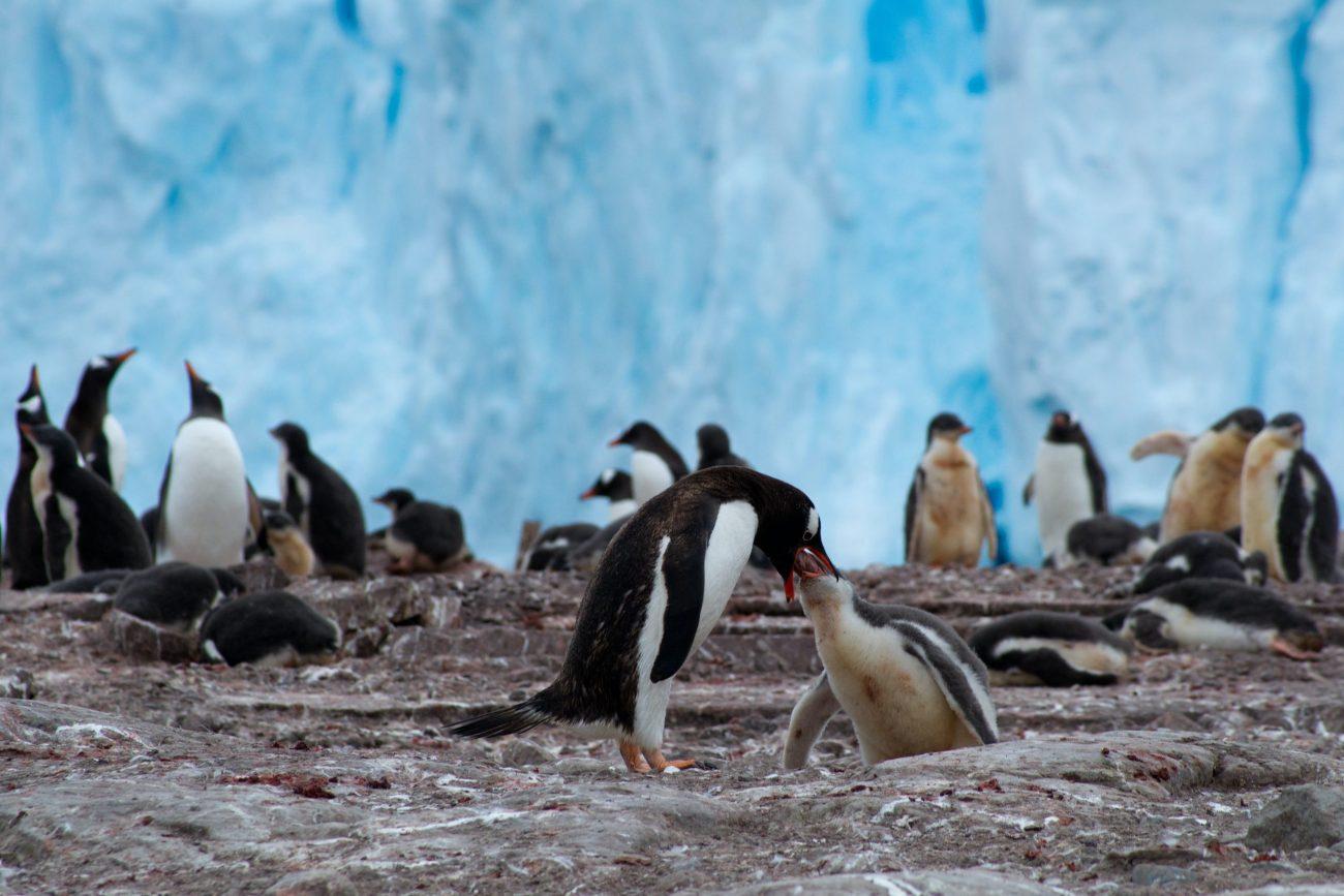 Antarctica-unsplash (6)