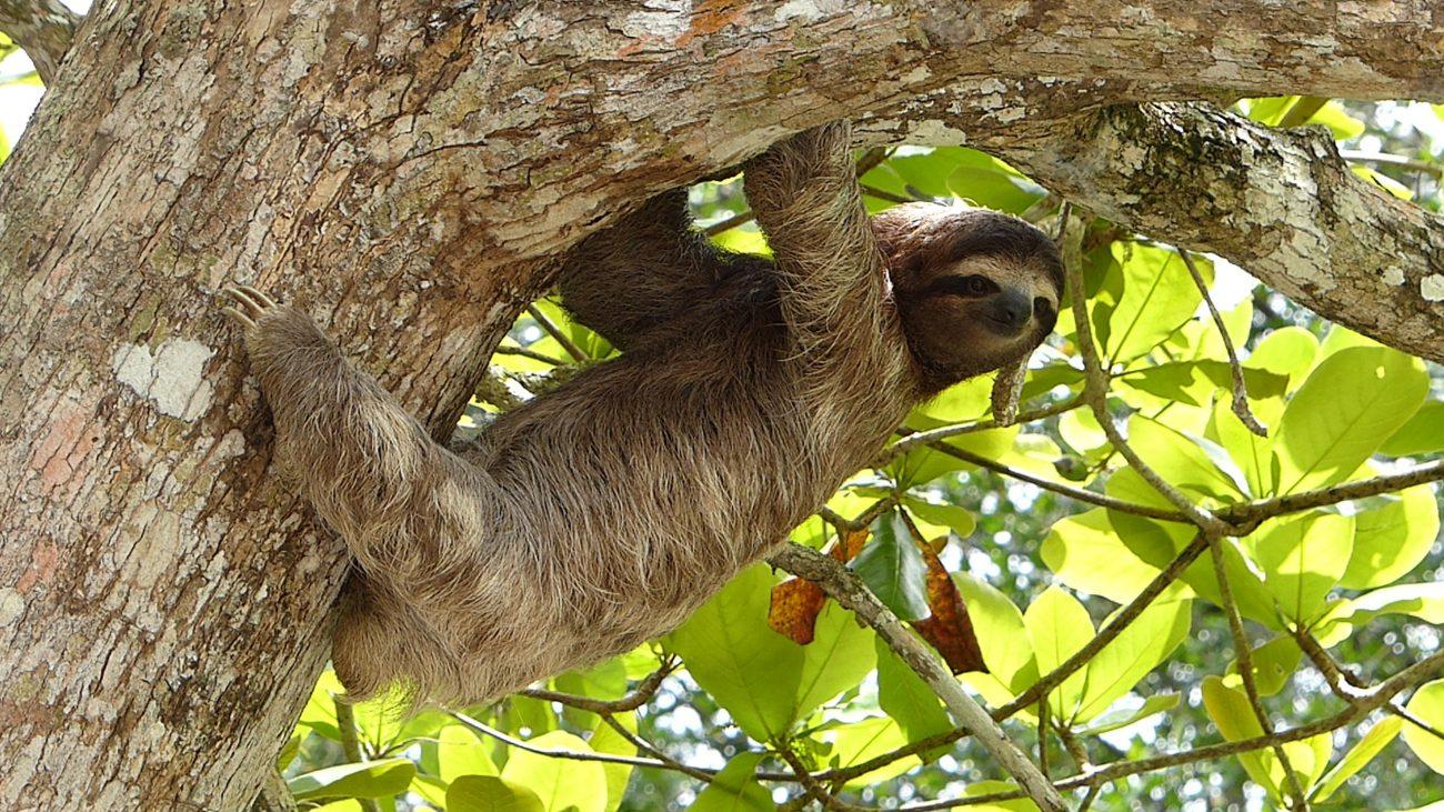 Costa Rica, Sloth-unsplash