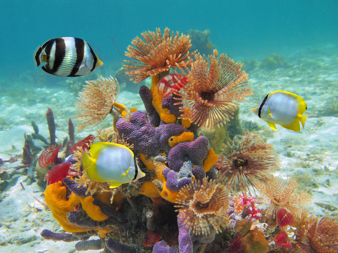 Colorful marine life underwater in Caribbean sea